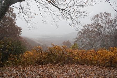 Blue Ridge Pkwy Rain