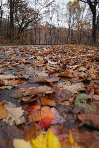 Leaf covered roads