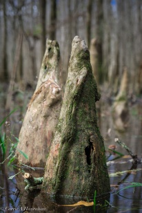 """The """"knees"""" of the roots."""