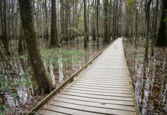 The boardwalk sits close to the flooding.