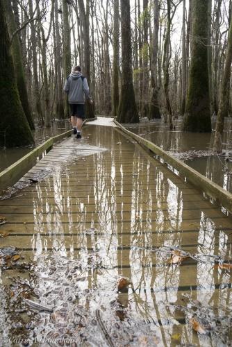 Fancy footwork on the flooded boardwalk!