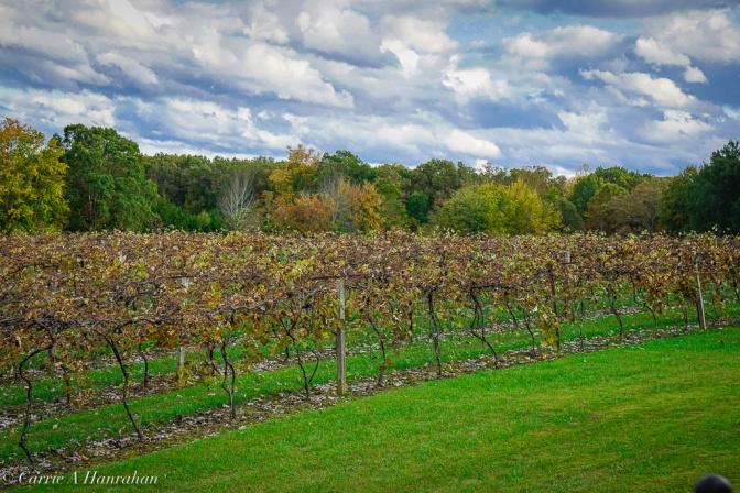Stunning vineyard.
