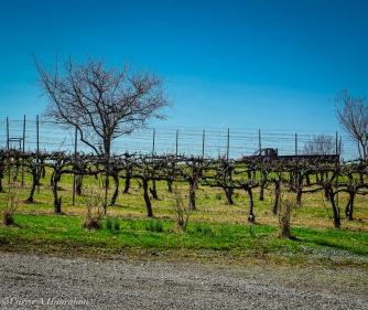 An onsite vineyard.