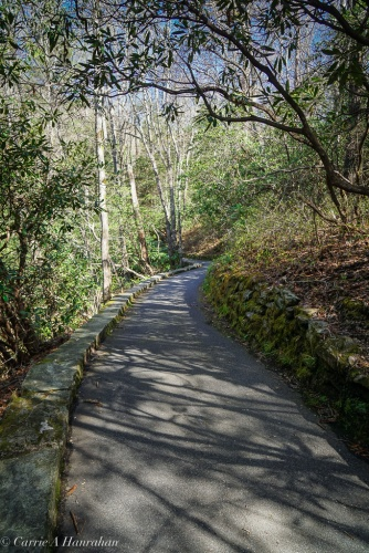 Peaceful paved trail