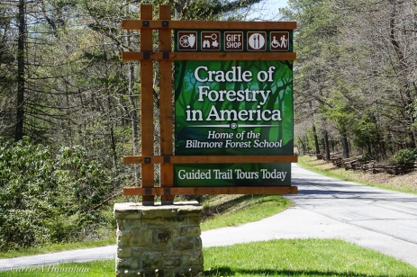 Cradle of Forestry-34