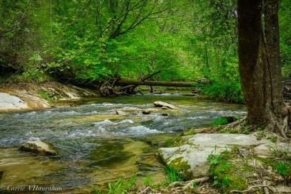 Roaring River_-16
