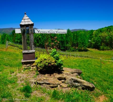 Victoria Valley Vineyard-9