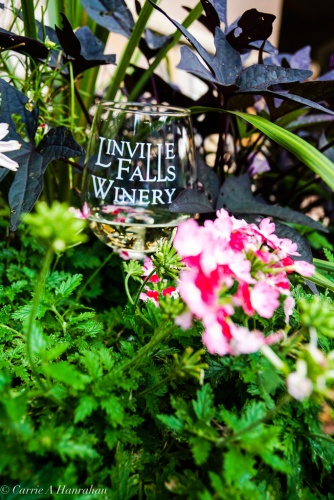 Linville Falls Winery-22