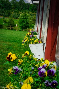 Linville Falls Winery-26