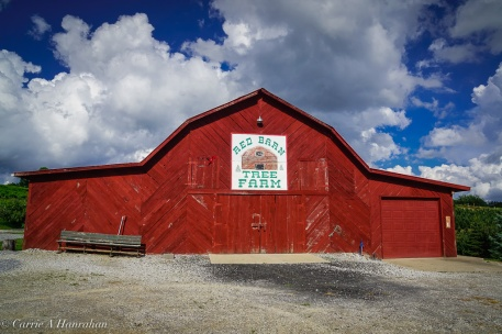 Linville Falls Winery-27