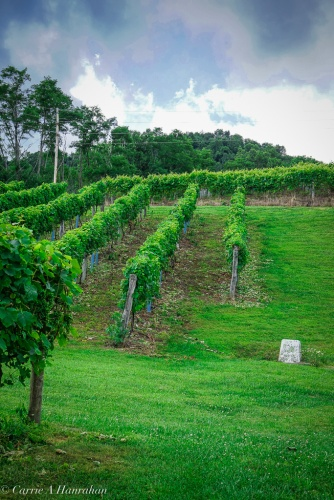 Linville Falls Winery-9